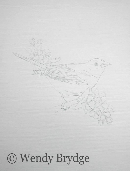 Oriole Sketch