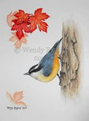 Wendy Brydge, Red-Breasted Nuthatch3